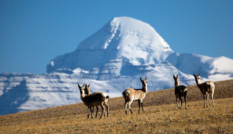 mount-kailash-ngari-tibet-34