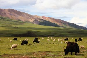 Changtang Plateau, Nagqu