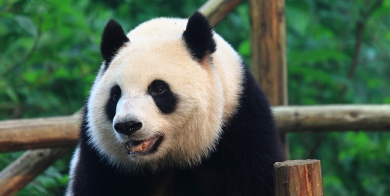 14 Days Classic China Tour with Tibet Train and Sichuan Panda
