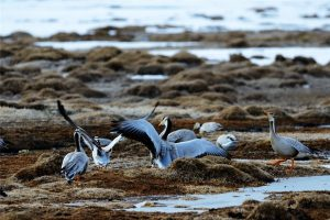 Longbaotan Black-necked Cranes Nature Reserve in Yushu