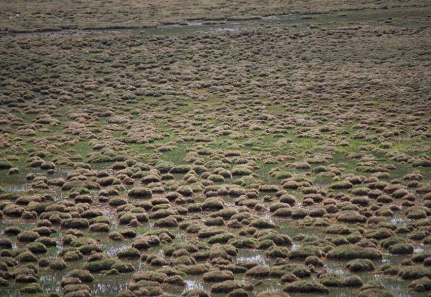 Maidika Wetland in Lhari County, Nagqu