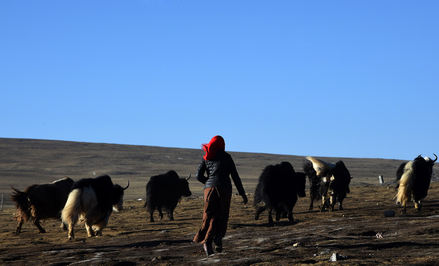 How to Get to Nyainrong County from Nagqu City (Seni District)