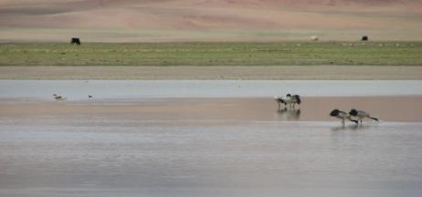 Shenzha Zangbu Wetland in Xainza County, Nagqu