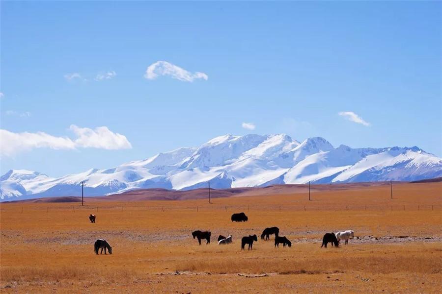 Xiagangjiang Snow Mountain in Coqen County, Ngari