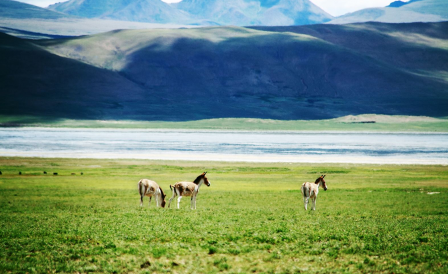 Zhegu Lake in Comai County, Lhoka (Shannan)