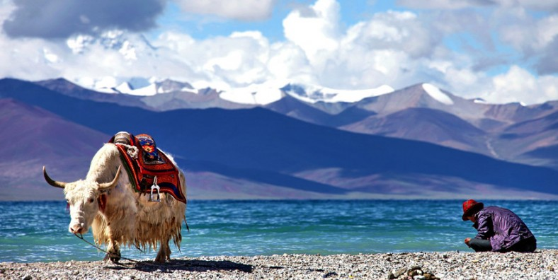 10 Days Tibet Nature Discover Tour with Mount Everest